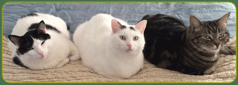 cat sitters arlington tx