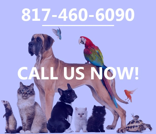 pet sitting mansfield tx