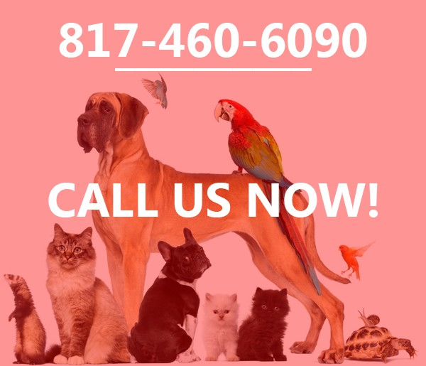 pet sitting service arlington tx