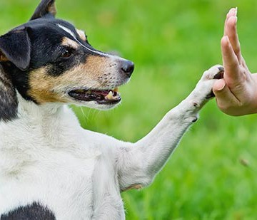 dog trainers in arlington tx