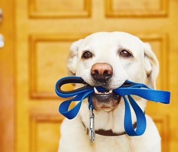 dog walkers in arlington tx
